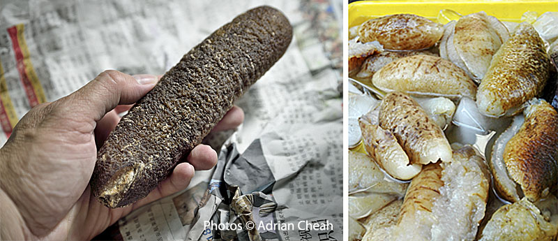 Sea Cucumbers Back To Nature Cures